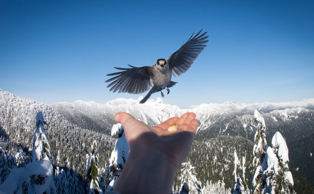 Bird on Cypress Mountain